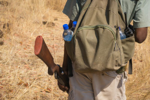 Zimbabwe - Doing a walking safari into the bush and tracing lion tracks